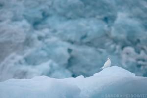 Spitzbergen_2014_SPE_PLA08_2414